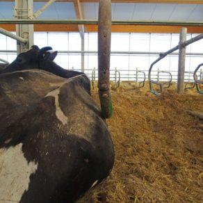 Jourdain Cowflex Free Stalls