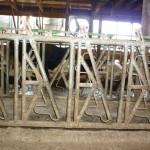 Steffenia Farms Headlocks 2