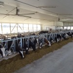View Hill Holsteins- New_082