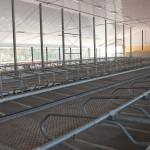 Vriesland Farm Ltd. Free Stall Facility 1
